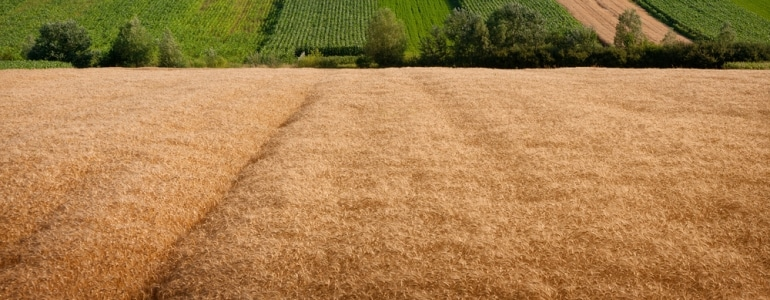 Закон о выделении земельных паев