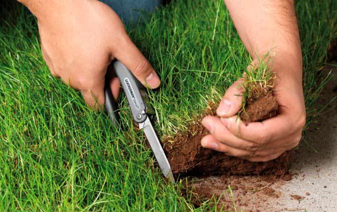 Какая ответственность за самозахват земли